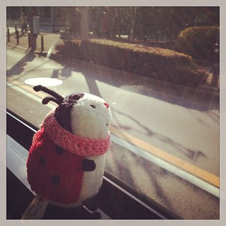 Ladybird #plush on the bus
