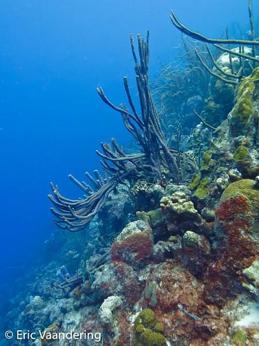 aquascapephotography barireef bonaire divesites photography typeofphotography underwaterphotography saliña netherlandsantilles
