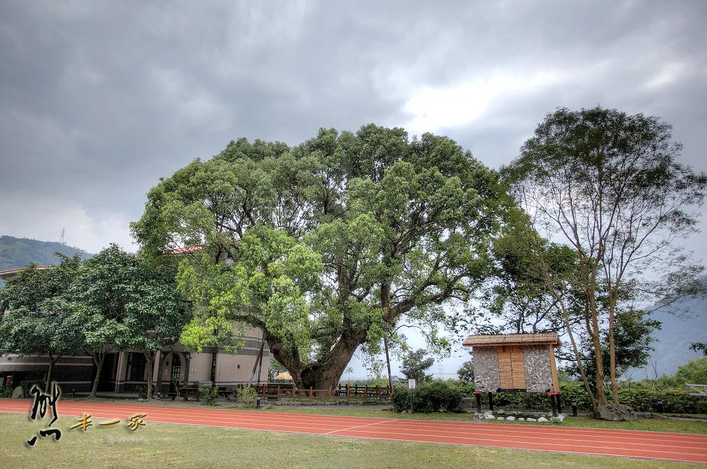 澳花國小|南澳鄉景點|宜蘭景點|樟樹600年樹齡