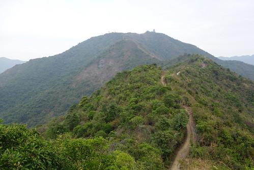 九龍坑山的山路