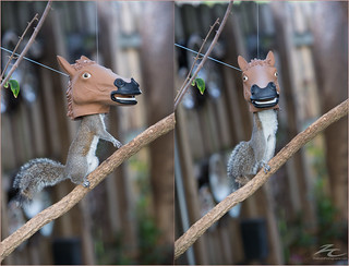 Horse mask squirrel feeder = FUN!