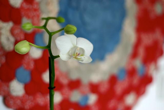 orquídea_7_20140119 - Version 2
