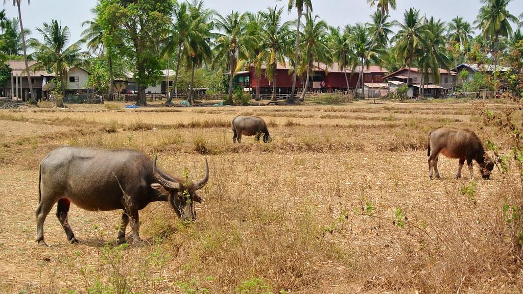 Don Khon, Laos. 17