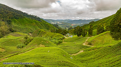 Beautiful landscapes of Cameron Highlands - tea and flower capital of Malaysia
