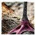Bird Foot by GAPHIKER