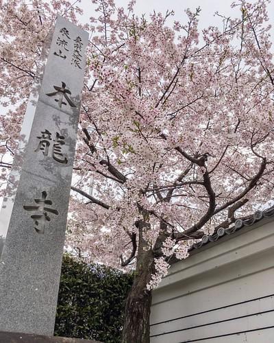 #桜 #🌸 #cherryblossom #flower #lightroomhdr