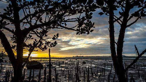 auckland centralbusinessdistrict skytower waitemataharbour beach city cloud harbour lowtide mangrove morning mud nature ocean outdoor plant rock silhouette sky skyline sunrise tree aucklandwaitakere northisland newzealand