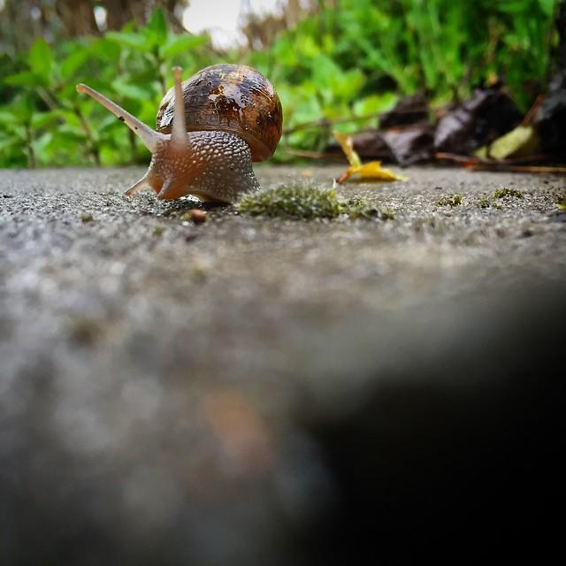 Snail totem synKringnicity