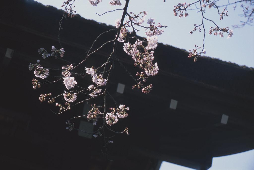 steps in spring