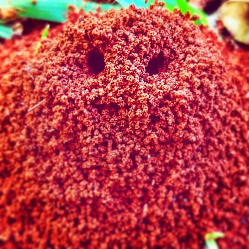 Eu achei que fosse um pé de narina, mas na verdade são olhos e uma boquinha de lado aberta. Qualquer semelhança com um formigueiro não é mera coincidência. #in #instagood #insta #instago #instacool #instagram #instapic #instasize #instalove #instadaily #i
