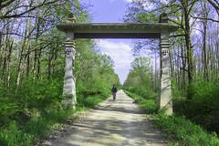 Arch - Vrata od krča