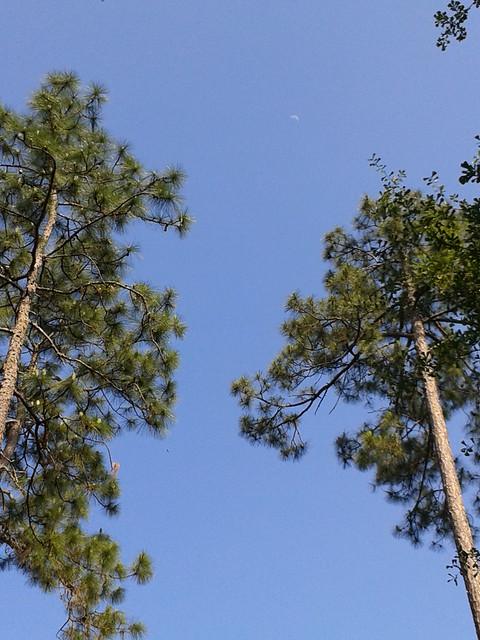 Luna trees