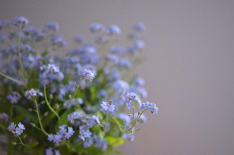 spring flowers_559
