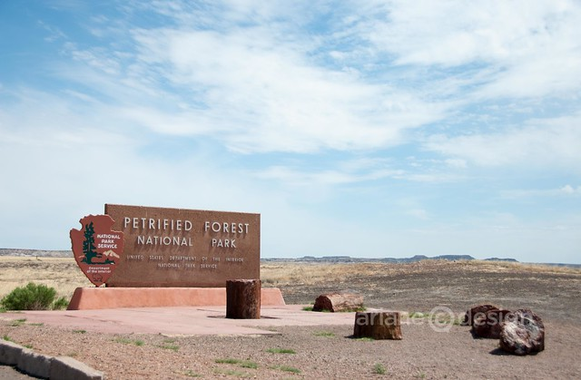 Petrified Forest-Painted Desert-1