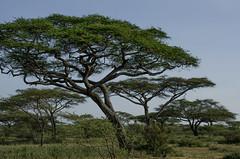 Tanzania-Masek-SafariDrive-143
