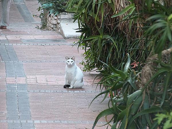 petit chat à Antibes
