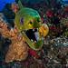 IMG_2166 by Kadu Pinheiro - Underwater Photography