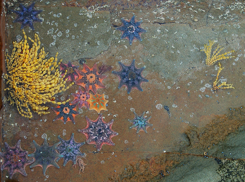 _starfishes_