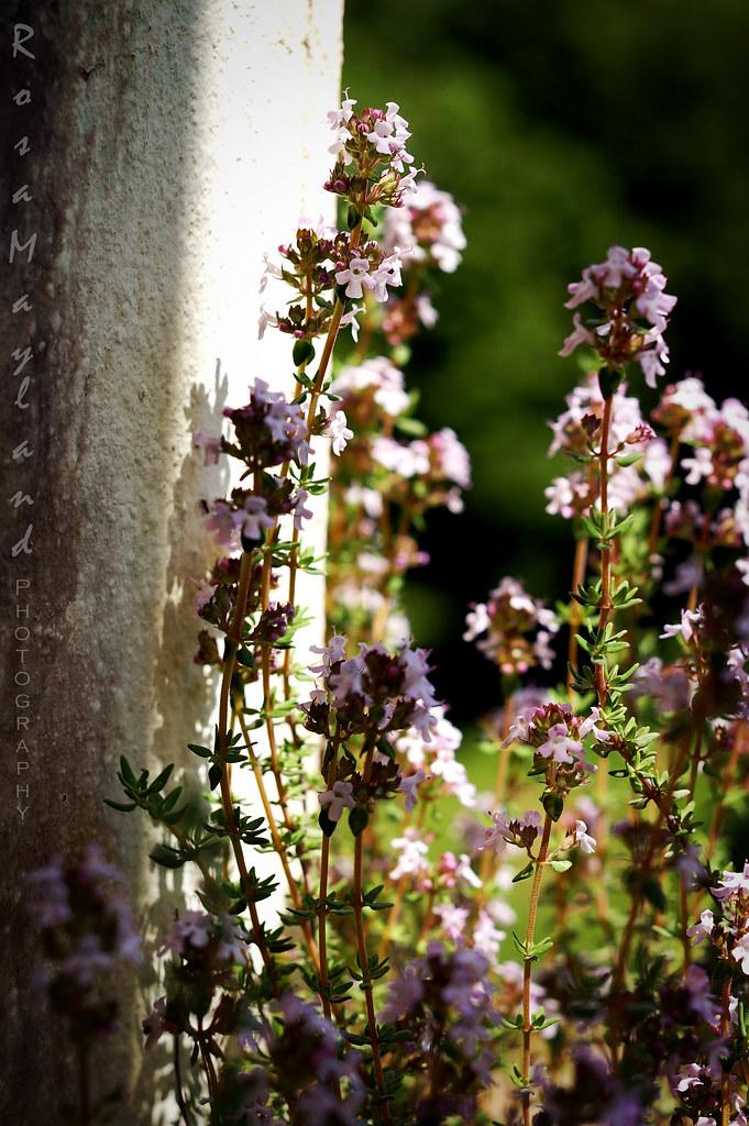 Flower 3 6 bis