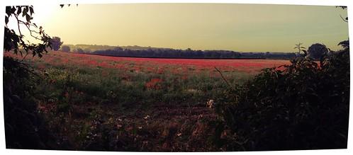 field sunrise shropshire poppy quatt uploaded:by=flickrmobile flickriosapp:filter=iguana iguanafilter