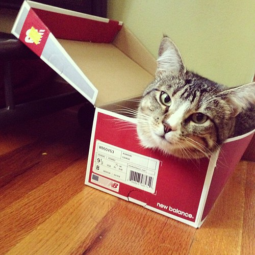 Give a cat a box and she's going to stuff herself in.