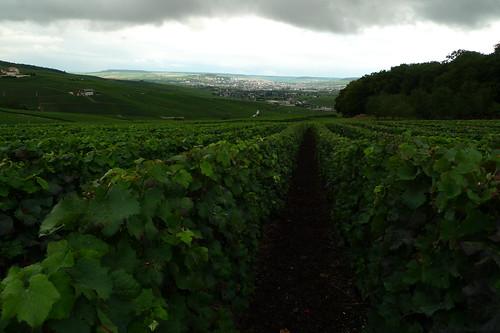 Vineyards outside of Champillon