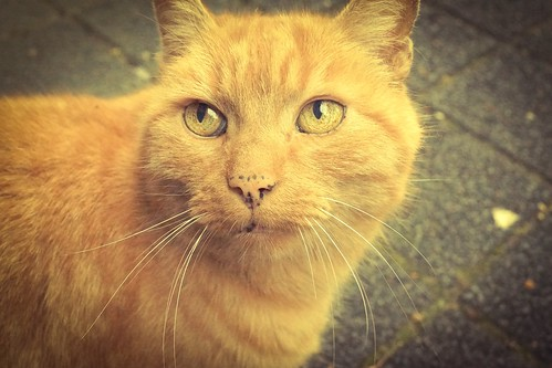 The cute ginger cat :)