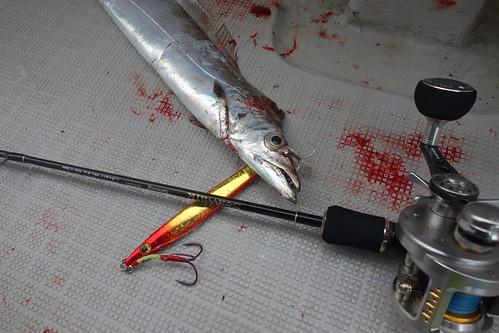 太刀魚&アグラーム&シーウォーク