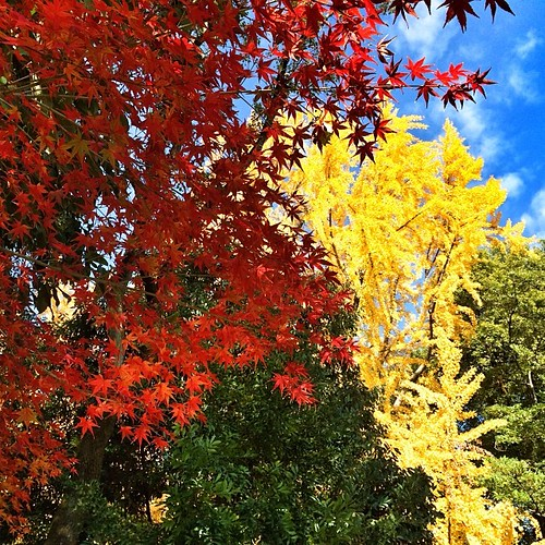 赤、黄、緑な樹木、青い空。