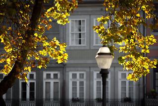 Obraz Outono. portugal 300mm autumncolors telephoto porto outono jardimdacordoaria portodistrict lr5 ef300mmf4 canoneos5dmarkiii 5d3 lightroom5