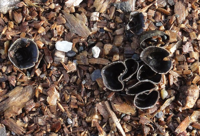Mystery Fungi V