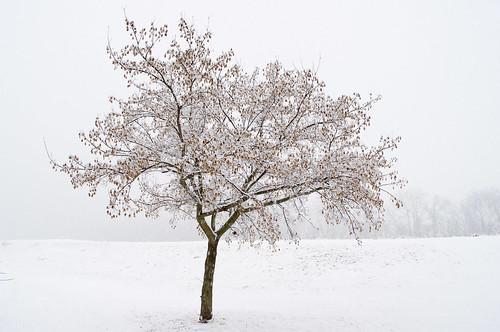 winter snow tree landscape massachusetts newengland hadley