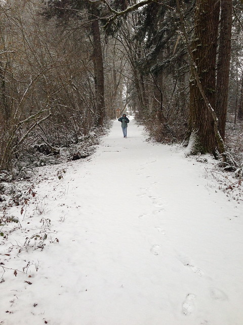 Snow: Wilderness Park trail