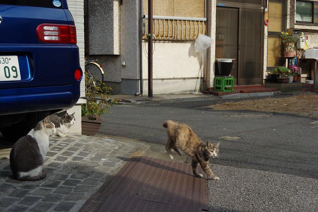 PENTAX K-3で撮影 東京路地裏散歩 東向島~浅草~上野 2014年3月4日
