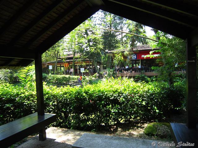 Ridout Tea Garden 02