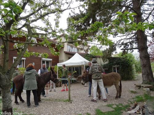 Balade avec les ânes en Vexin français