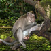 monkey forest ubud 22feb2017 32