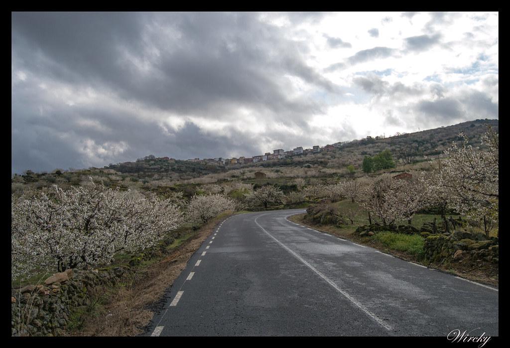 Valle del Jerte ruta circular sierra - Cerezos llegando a Valdastillas