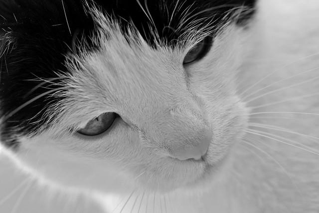 Maniek - My furry sweetness:-))