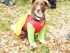 Robin Dog!