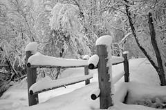 Beus Pond Snow Black and White.jpg