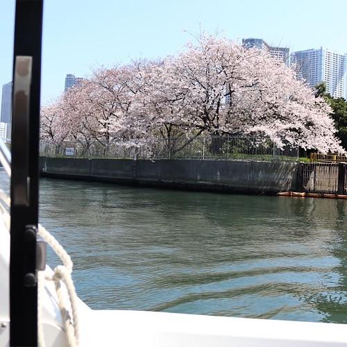 浜離宮、ボートからお花見。 #地域ブログ #桜 #Locketsリレー #ヤマハマリン #seastyle