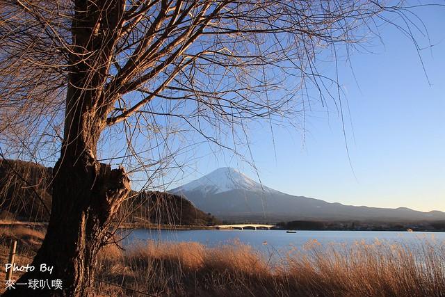 東京河口湖音樂森林041