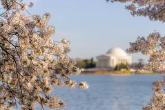 Spring in DC II