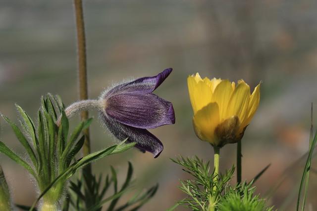 quand les fleurs se racontent des secrets...