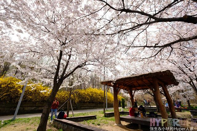 首爾林seoul forest (31)