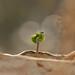 Tuesdays seed:-) by Jolika