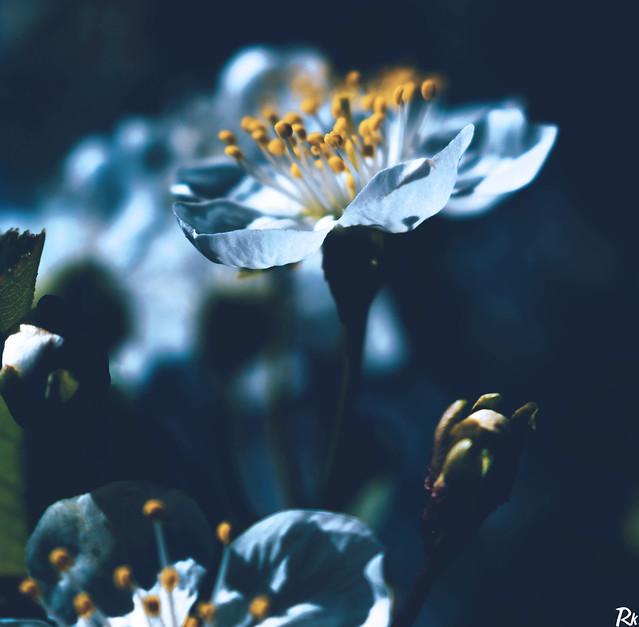 Blossom (2) @springtimebouquet
