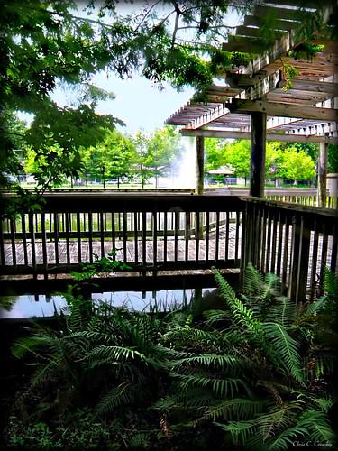 magnoliaparkwalkway railing deck pergola fountain pond trees scenic landscape park magnoliapark southdaytonaflorida