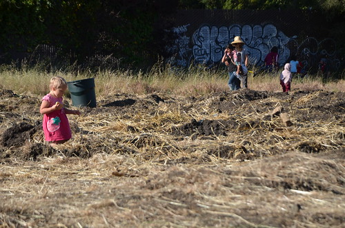 "Daniel Arauz posted a photo:	For complete article please visit:occupythefarm.org/category/c27-statements/""On Saturday, May 11th, Occupy the Farm peacefully marched onto the Gill Tract to challenge the UC's renewed plans for private, commercial development of this public agricultural resource, replacing 5-foot high weeds with thousands of squash, kale, basil, corn, lettuce and tomato plants, and even flowers.Rather than recognizing this as an opportunity to position itself on the cutting edge of urban agriculture and participatory research, the University raided the farm on Monday, May 13, at 4:30 a.m. and violently arrested four peaceful farmers, three of whom were held for more than 60 hours before being released without charge. The University then ploughed over the farm that morning, destroying thousands of starts that, if nurtured, would have provided sustenance to local communities.""This land has been vacant for years,"" said an Occupy the Farm member, Matthew McHale, ""the UC only destroyed the crops because it's afraid that if the community sees what an amazing asset this would be as a community farm, they would refuse to let it be paved over.""In protest of the UC's actions, more than eighty farmers and community members re-converged on Monday afternoon for a rally, then marched back onto the farm to replant the field and recover some of the starts they had planted over the weekend. The University plowed the farm again Tuesday morning.Since Occupy the Farm first planted on the Gill tract in April 2012, the group has organized at least 10 public forums focused on the Gill Tract as an asset to community-driven participatory research. The UC Berkeley administration has consistently failed to attend, despite being invited repeatedly. Students on campus however, support turning the land into an urban farm; last Spring the Associated Students of the University of California Senate unanimously passed a resolution in support of Occupy the Farm."""